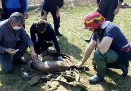 Căprioară căzută într-un bazin, salvată de pompierii din Marghita (FOTO / VIDEO)