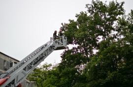 O pisică a fost salvată de pompierii orădeni dintr-un copac înalt de 15 metri (FOTO / VIDEO)