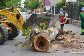 Au început defrişările de pe Aleea Ştrandului, pentru pasajul Magheru. Primii arbori au fost doborâţi joi (FOTO / VIDEO)