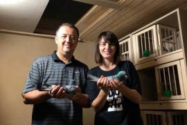 Campionatul porumbeilor voiajori: Familia Tunduc câştigă etapa de fond Strakonice, iar Gergely Vasile etapa de viteză Budapesta