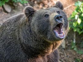 O unguroaică a vrut să îşi facă selfie cu un urs la Lacul Sfânta Ana. Ghici ce s-a întâmplat!