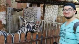 Au pictat un măgar în zebră? O grădină zoologică din Egipt e acuzată că păcălește vizitatorii