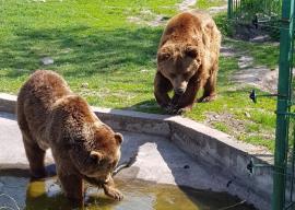 ADP: Se redeschide Zoo Oradea