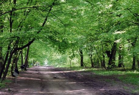L-au ademenit cu o partidă de sex în trei şi l-au lăsat fără portofel: Un bărbat din Prahova a fost tâlhărit în pădurea din Băile Felix