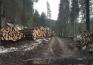 Nouă captură a poliţiştilor de la Delicte Silvice Bihor: O firmă din Cluj a vândut peste 100 mc de lemn furat din Valea Drăganului